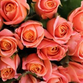 En flot buket blomster